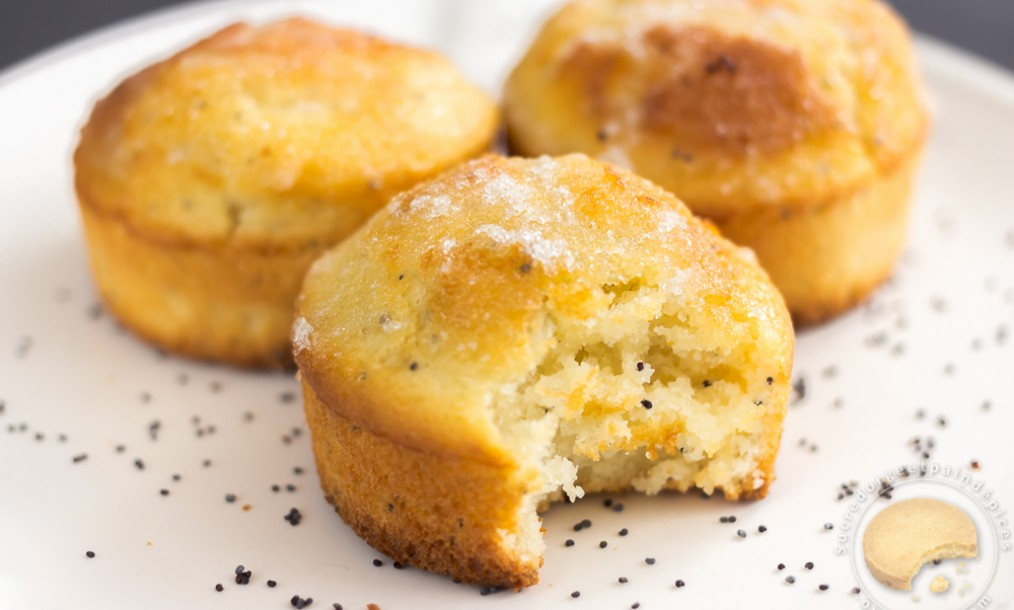 Petits gâteaux moelleux citron et pavot bleu , Sucre d\u0027Orge et Pain d\u0027Epices